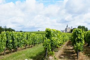 histoire vigne